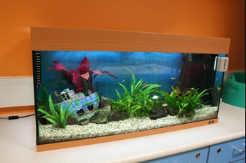 Fish tank on Ocean ward