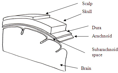 Diagram showing subarachnoid space: brain and spine